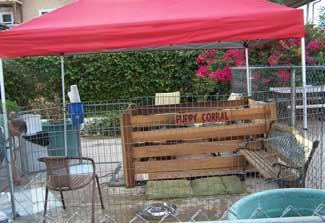 Puppy Corral setup